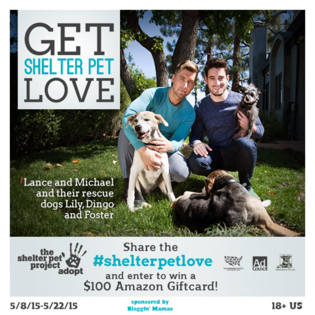 Shelter Pet Love $100 Amazon Giftcard Giveaway